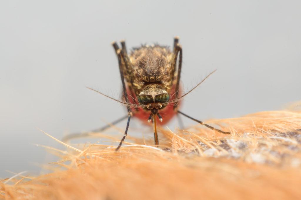 Prevenir o mosquito da dengue